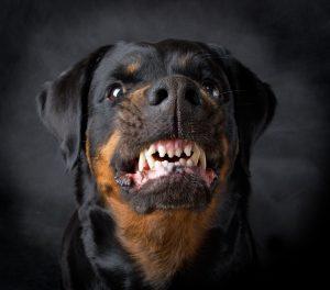 dog bite injury, louisville personal injury attorneys